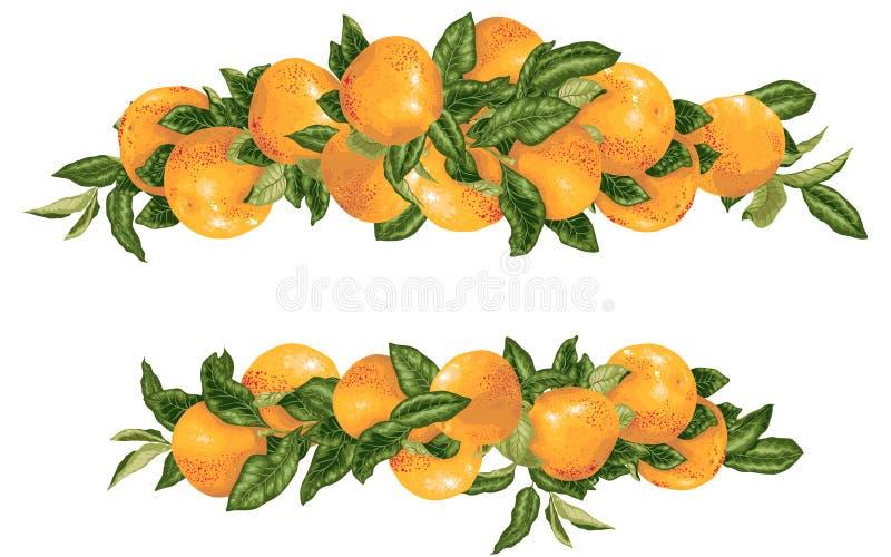 Branches d'agrume de pamplemousse d'elementwith de décor de titre de vecteur dans l'illustration réaliste de conception graphique illustration stock