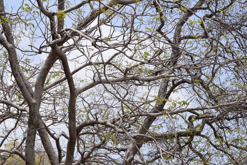 branches d'arbre à la montagne photographie stock libre de droits