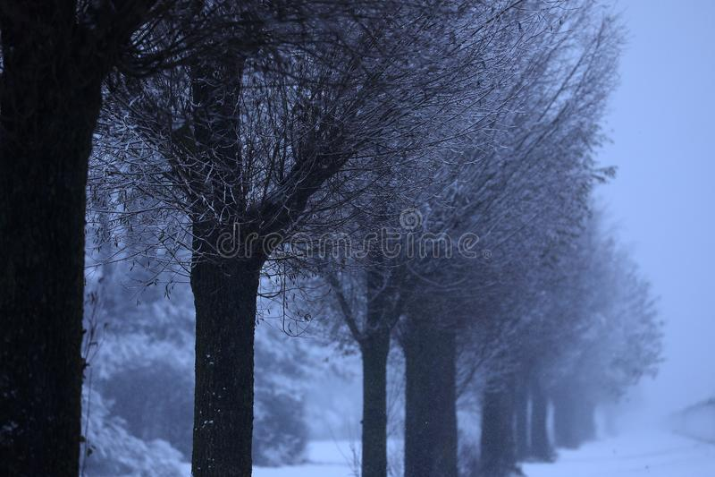 Branches d'arbre avec la neige photo libre de droits