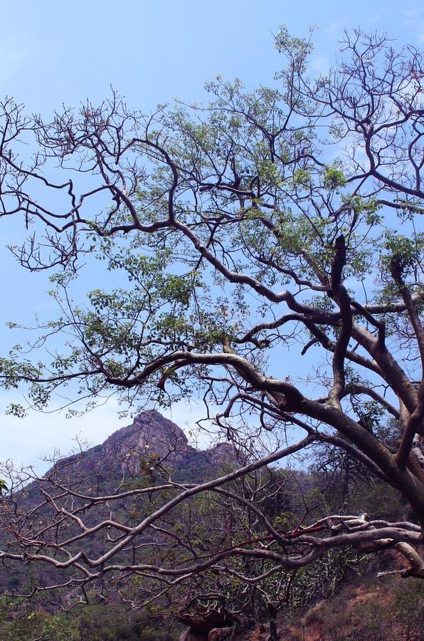 Branches d'arbre avec le paysage de colline photographie stock libre de droits