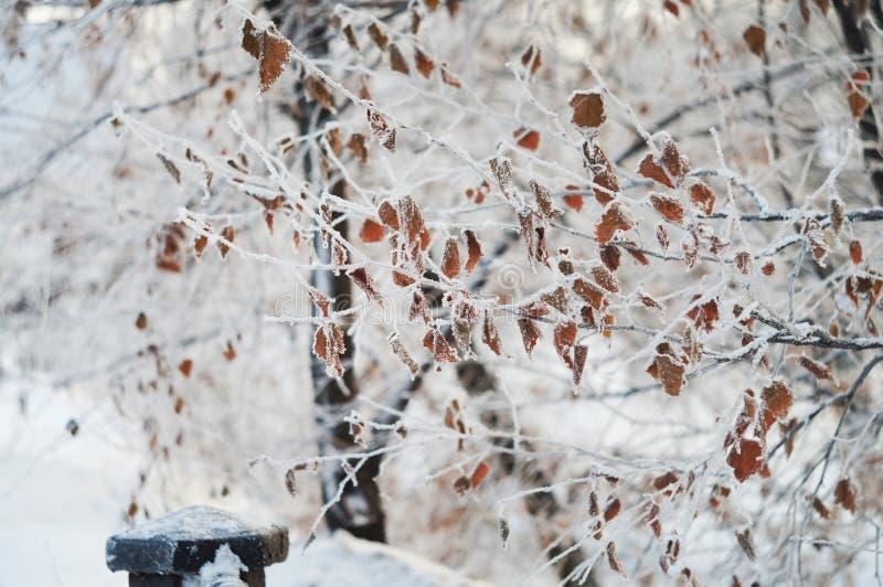 Branches d'arbre congelées par hiver photo stock