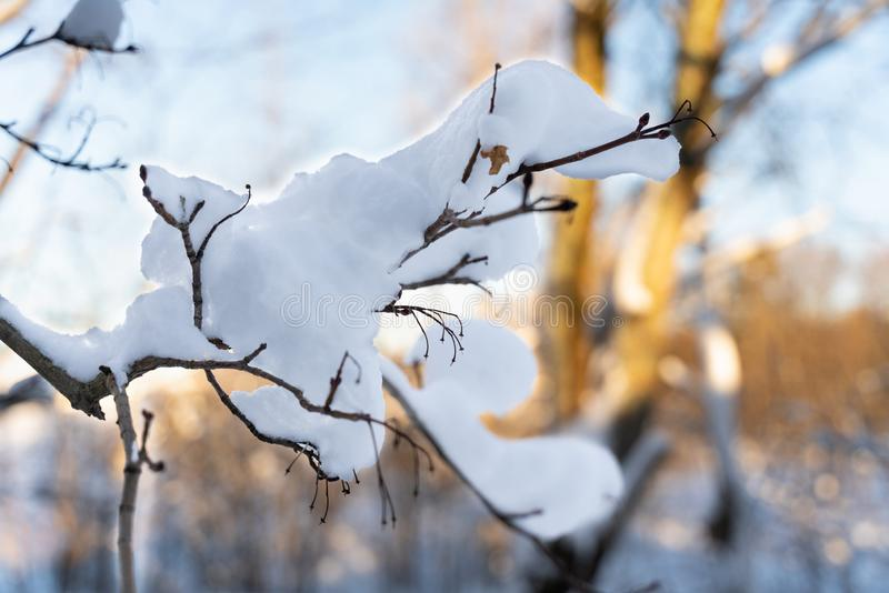 Branches d'arbre couvertes de neige contre le ciel images libres de droits