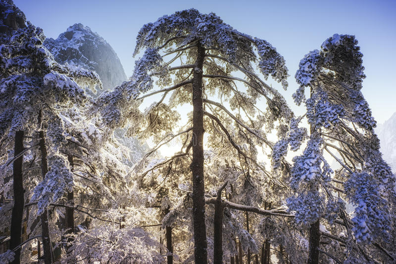 Branches d'arbre couvertes par la neige et la glace images libres de droits