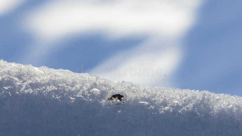 Branches d'arbre dans la neige avec le contre-jour contre le plan rapproché de fond de bokeh, foyer sélectif, DOF peu profond photos libres de droits