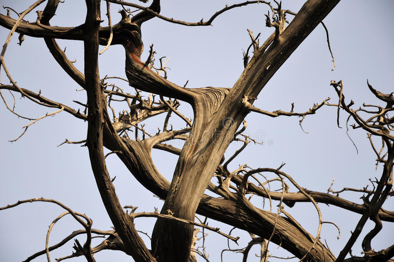 Branches d'arbre de Cypress photo stock