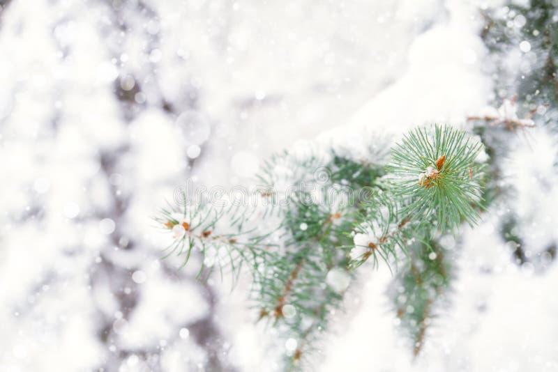 Branches d'arbre de sapin couvertes de neige dans la forêt photos libres de droits