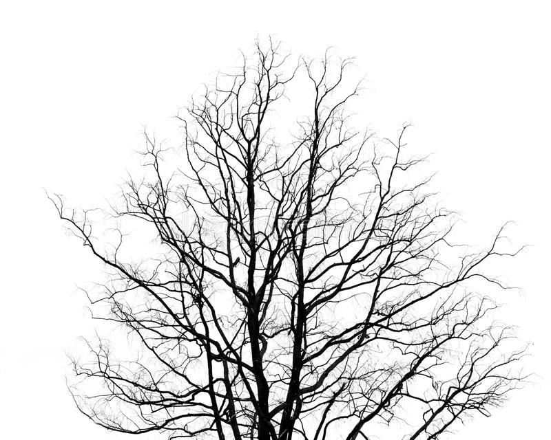 Branches d'arbre mort image stock