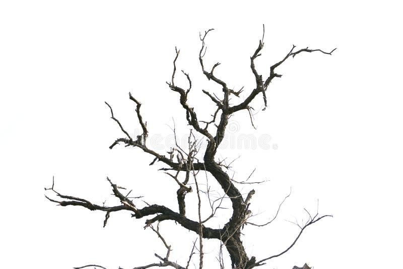 Branches d'arbre mortes d'isolement photo libre de droits