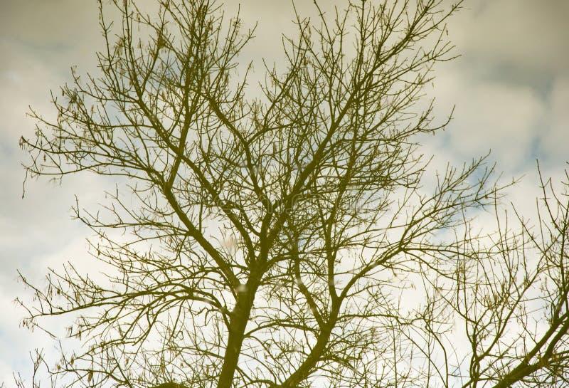 Branches d'arbre nues dans la réflexion de l'eau photo stock