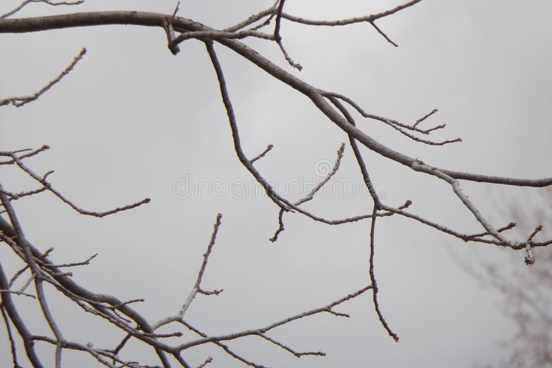 Branches d'arbre nues et sans feuilles contre Grey Sky images stock