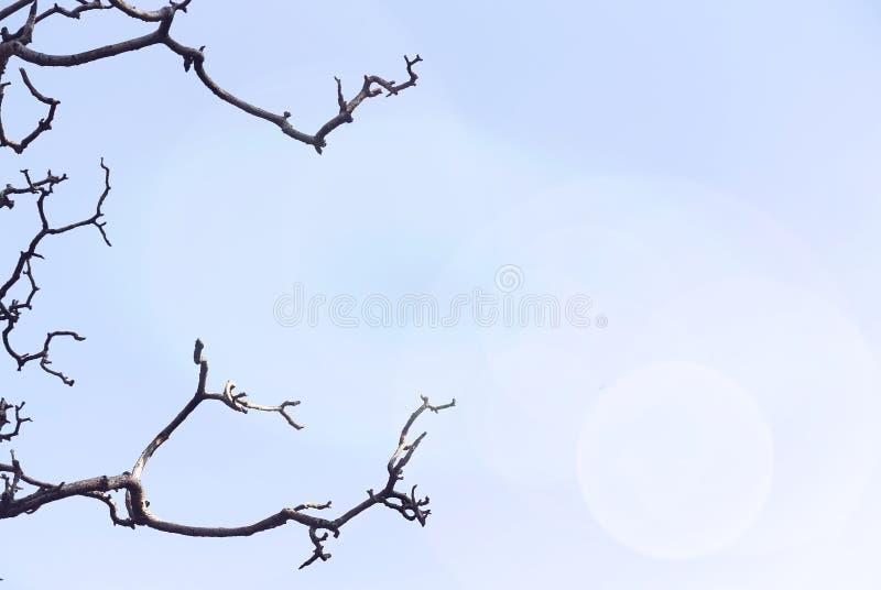 Branches d'arbre nues rampantes contre le ciel clair image libre de droits