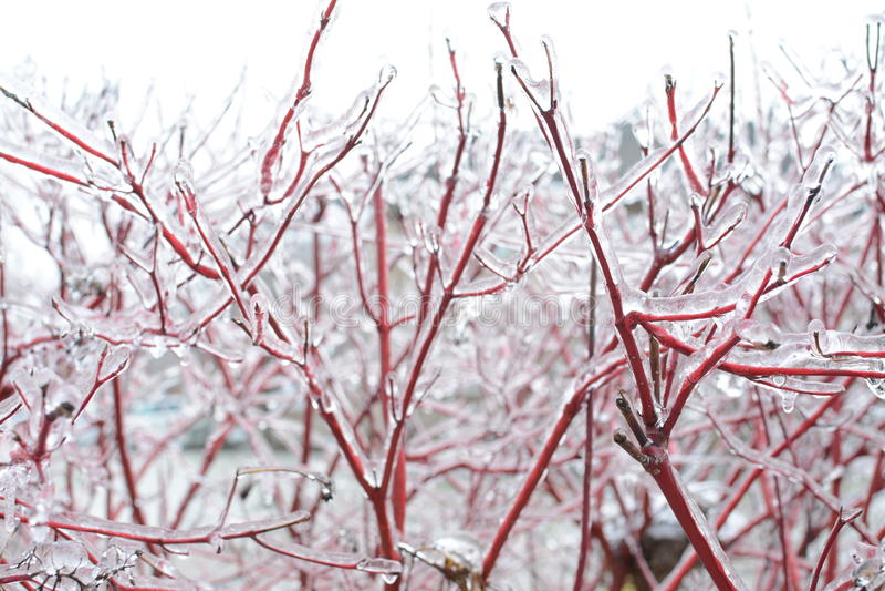 Branches d'arbre pendant la tempête de pluie verglaçante photos libres de droits