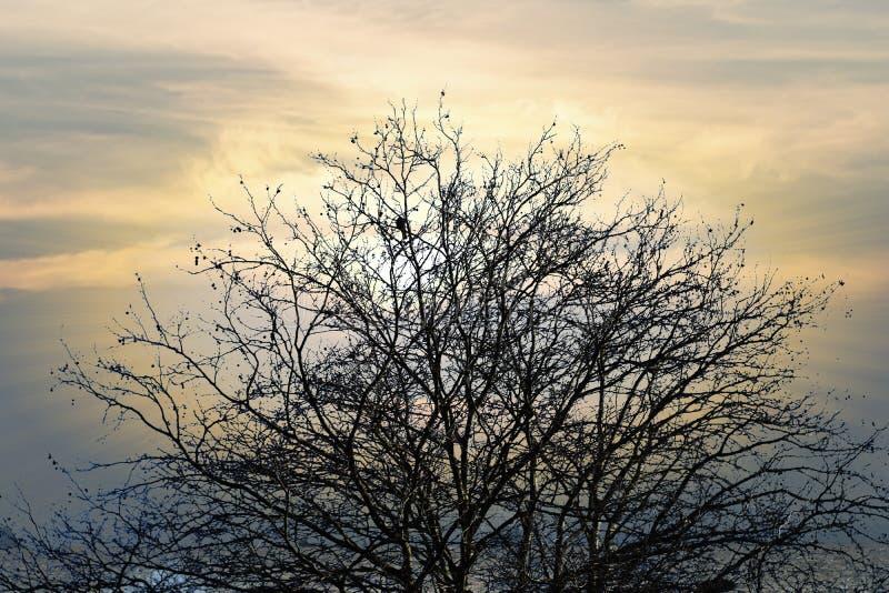 Branches d'arbre sans milieux de congé photos stock