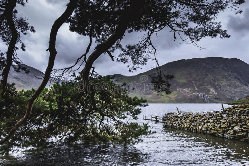 Branches d'arbre touchant l'eau sur au bord du lac dans le secteur de lac, Cumbria, R-U photographie stock