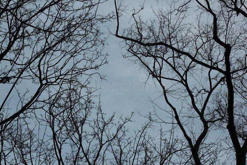 Branches d'arbre vides sur le fond avec un ciel clair de soirée en hiver Fond gothique photographie stock libre de droits