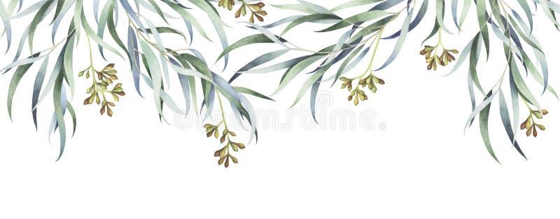 Branches d'eucalyptus de saule avec des graines d'isolement sur le fond blanc Illustration d'aquarelle illustration libre de droits