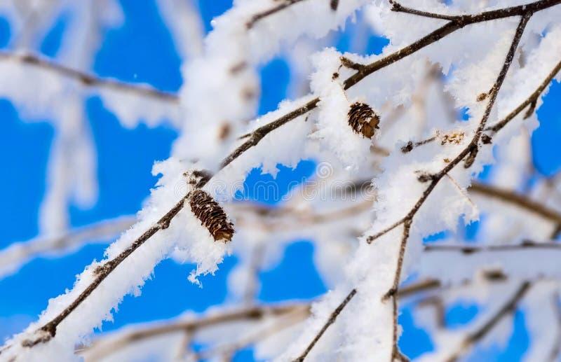 Branches d'un bouleau avec la neige et la gelée brillantes blanches photo libre de droits