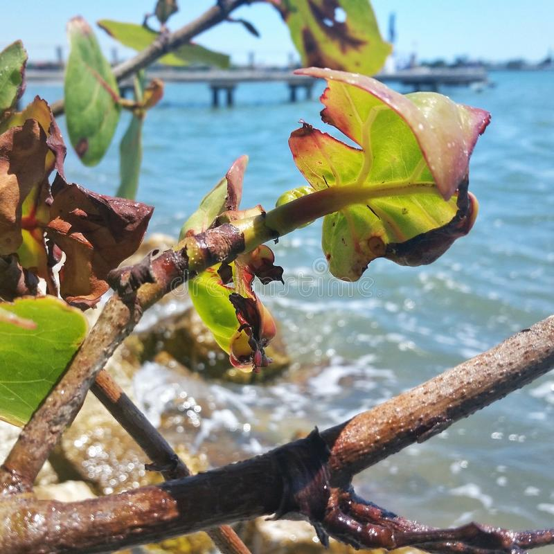 Branches de baie image stock