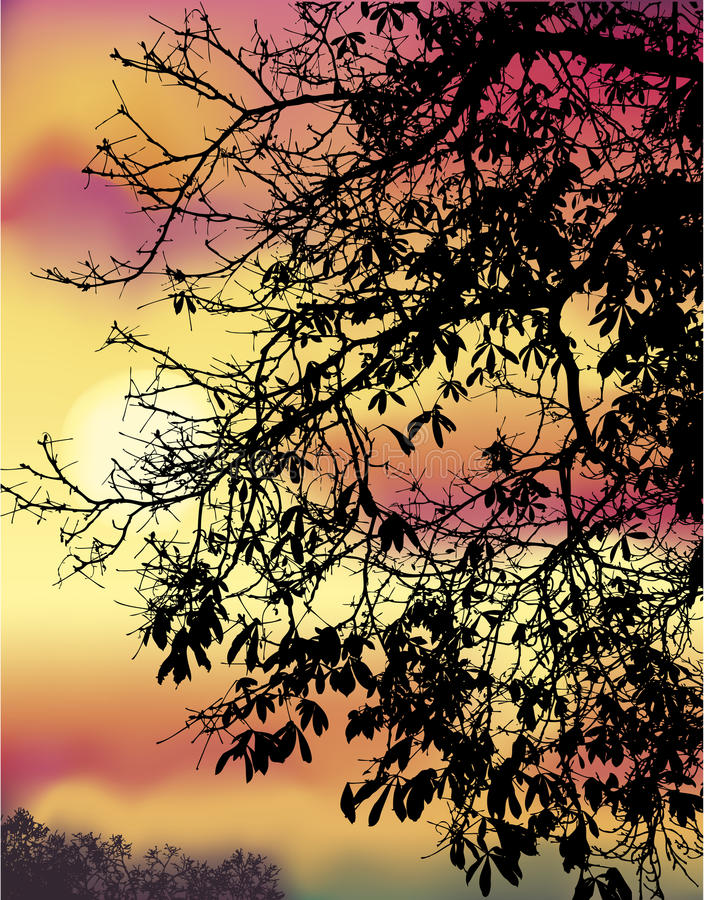 Download Branches De Châtaigne D'automne Illustration de Vecteur - Illustration du nuageux, crépuscule: 38556911