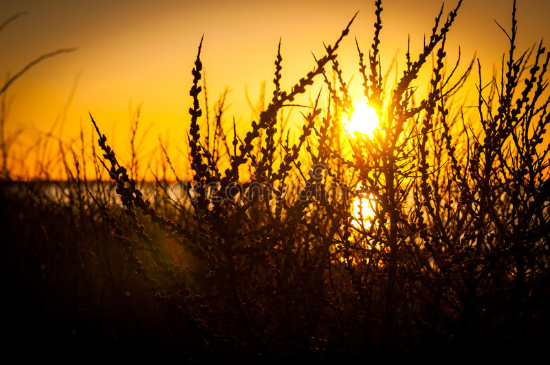 Branches de coucher du soleil images stock