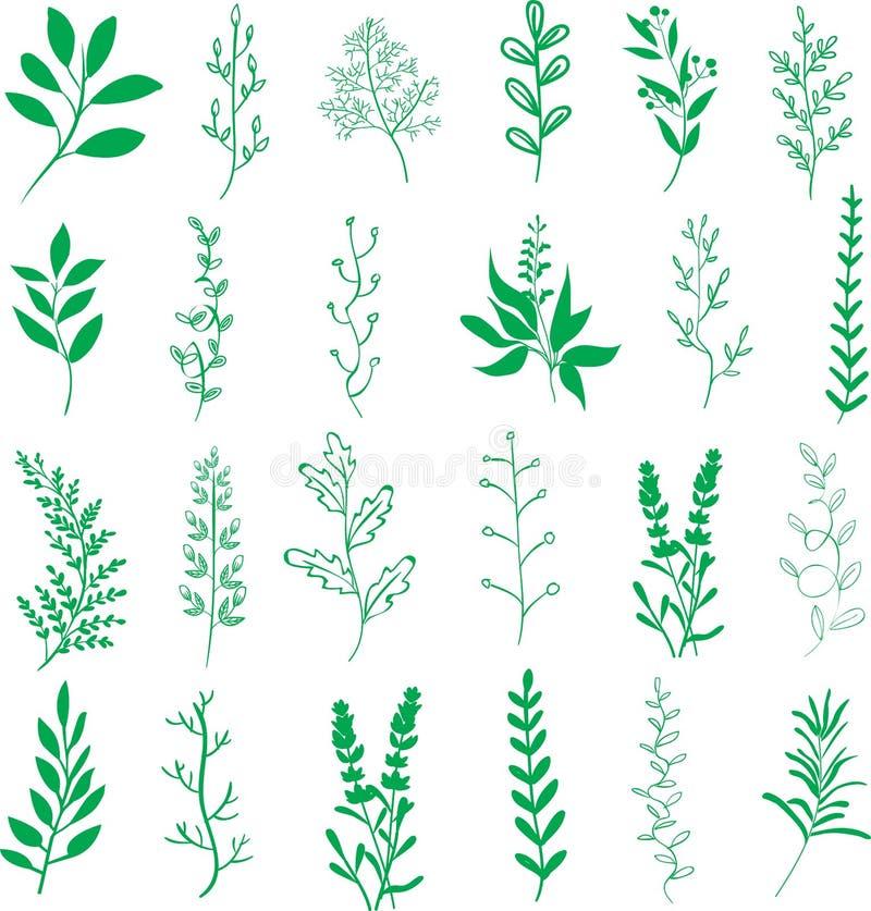 Branches de feuilles d'usines illustration de vecteur