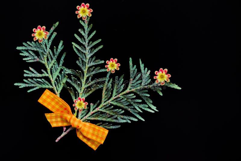 Branches de genévrier vert avec un arc jaune fait de tissu et fleurs naturelles sur le fond noir image libre de droits