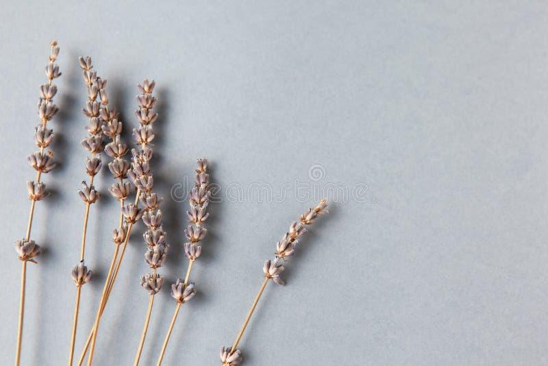 Branches de lavande sur le fond gris, l'espace de copie Emplacement inférieur Configuration d'appartement de Minimalistic horizon photographie stock