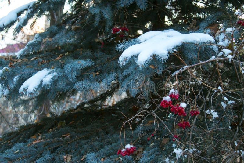 Branches de neige d'hiver de papiers peints photographie stock libre de droits