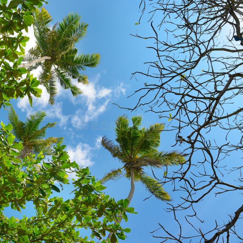 Branches de palmier sur le beau ciel de fond photos stock