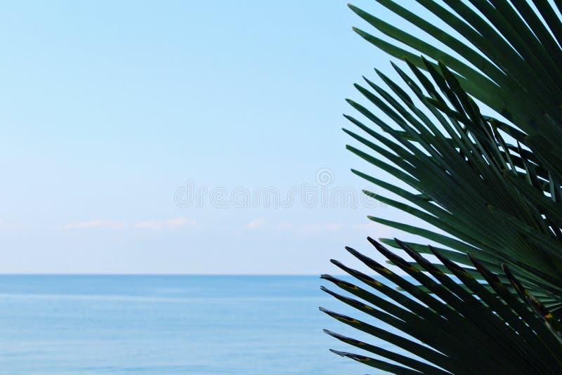 Branches de paume d'arbre en gros plan contre la mer de ciel bleu et de turguoise pendant la journée en conditions naturelles photographie stock libre de droits