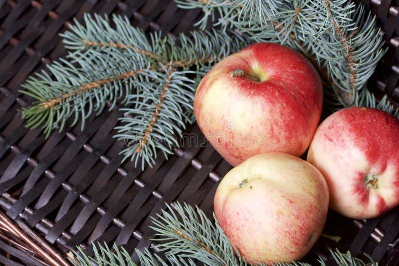 Branches de sapin bleu et de pommes parfumées mûres Dans la perspective d'une vigne en osier images libres de droits