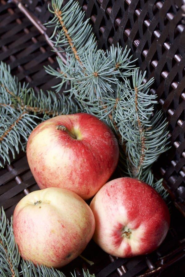 Branches de sapin bleu et de pommes parfumées mûres Dans la perspective d'une vigne en osier images stock