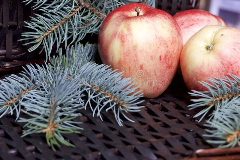 Branches de sapin bleu et de pommes parfumées mûres Dans la perspective d'une vigne en osier photographie stock