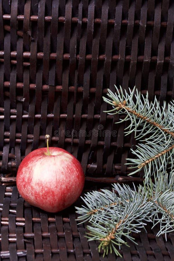 Branches de sapin bleu et de pommes parfumées mûres Dans la perspective d'une vigne en osier photos stock