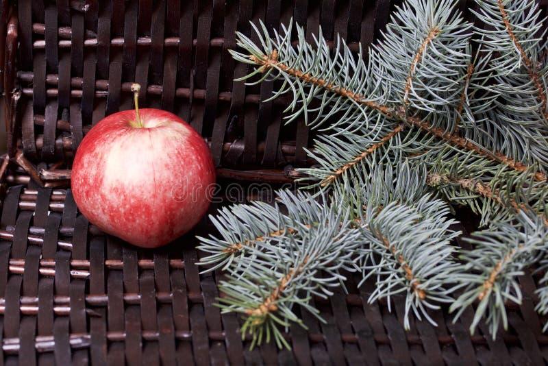 Branches de sapin bleu et de pommes parfumées mûres Dans la perspective d'une vigne en osier image stock