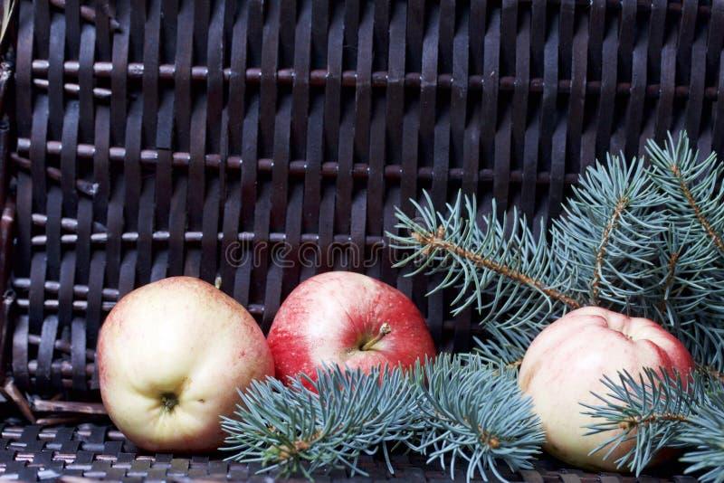 Branches de sapin bleu et de pommes parfumées mûres Dans la perspective d'une vigne en osier image libre de droits