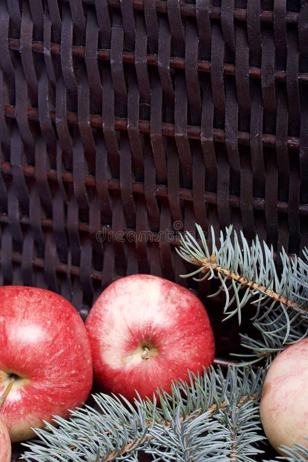 Branches de sapin bleu et de pommes parfumées mûres Dans la perspective d'une vigne en osier photos libres de droits