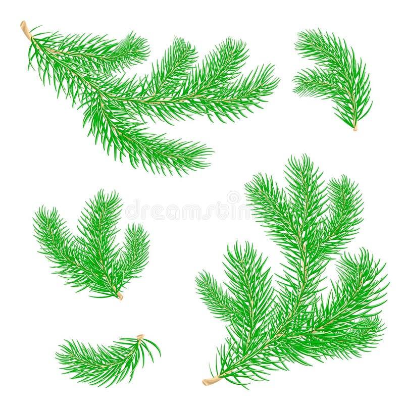 Branches de sapin Vecteur illustration de vecteur