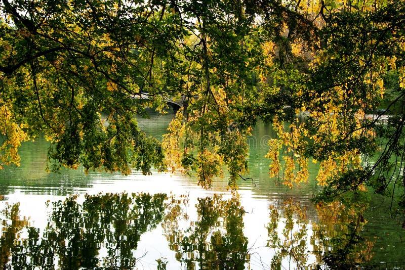 branches den att hänga laken över tree royaltyfri bild