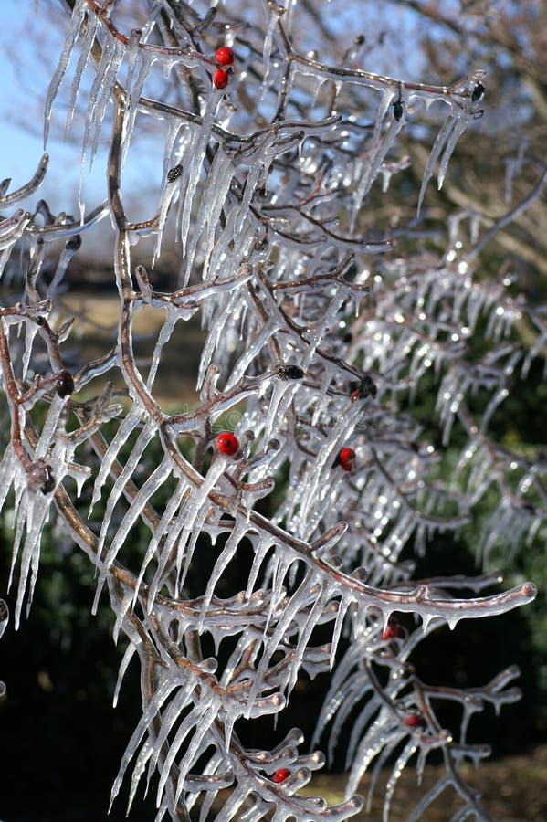 branches den icy treen fotografering för bildbyråer