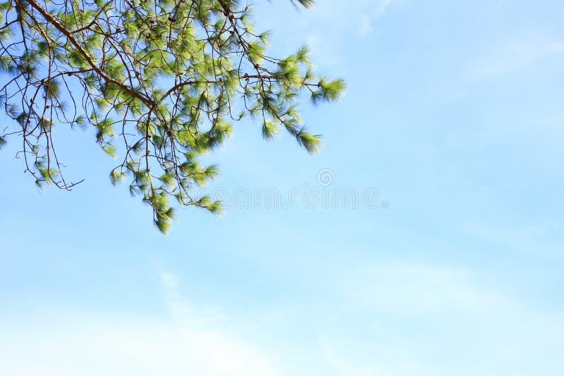 Branches derrière le ciel photographie stock