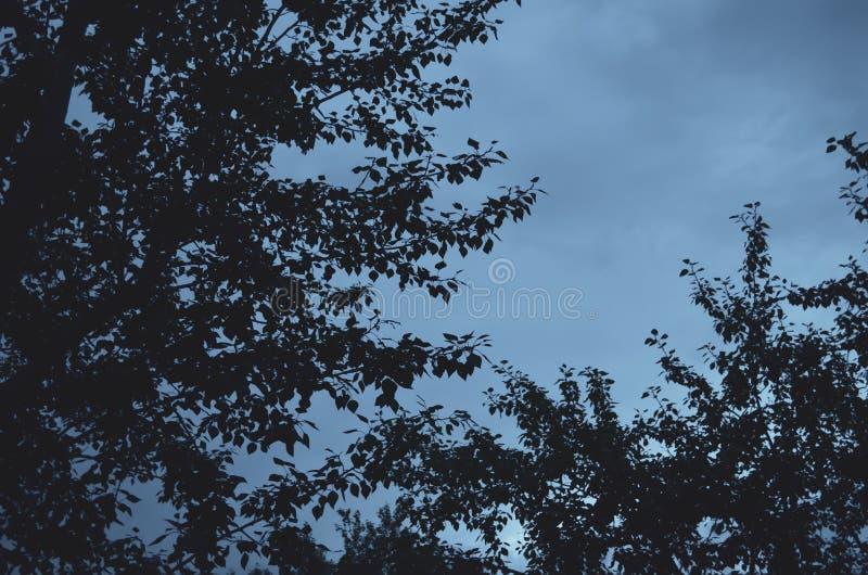 Branches des arbres à feuilles caduques contre le ciel nuageux égalisant Fond dans des tons bleus chauds photographie stock libre de droits