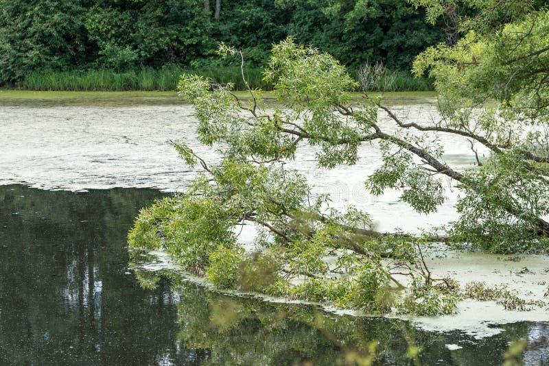 Branches des arbres sur une eau photos libres de droits