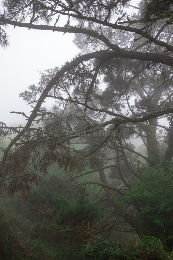 Branches des pins et d'autres arbres dans la for?t compl?tement de v?g?tation un jour brumeux Paysage de la Galicie, Espagne photos stock