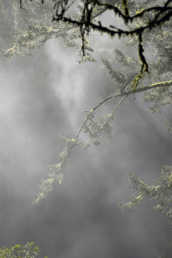 branches dimmigt mossy för skog arkivfoton