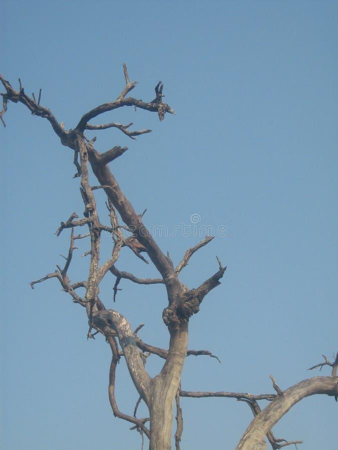 Branches du dessus d'un arbre images stock