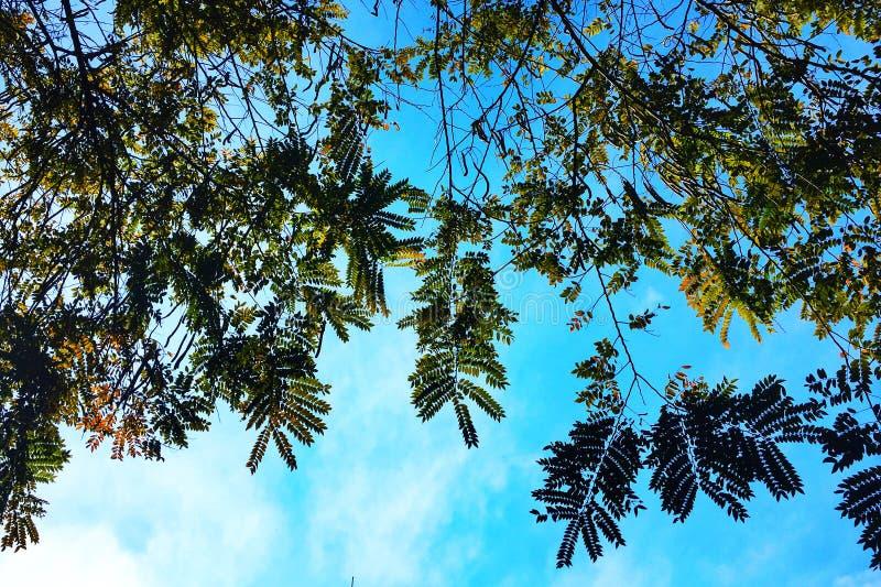 Branches et feuilles des arbres et du ciel bleu photos libres de droits