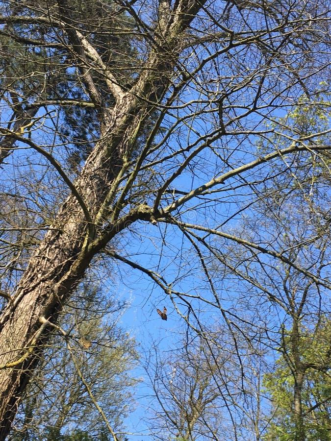 Branches et papillons photo libre de droits