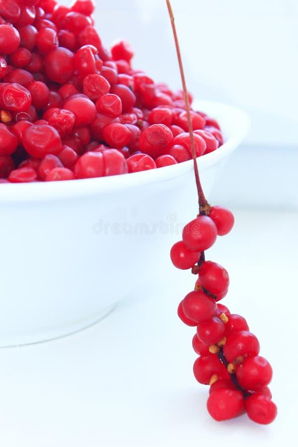 Branches et plein plat de schisandra mûr rouge d'isolement image libre de droits