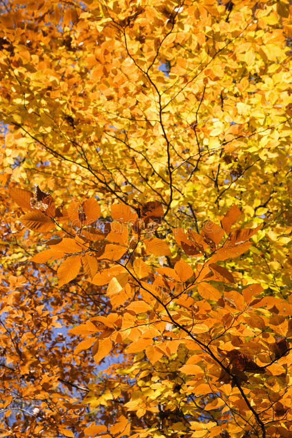 Branches of Fall foliage. royalty free stock images